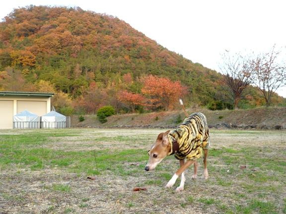 秋色の山と、年中秋色?のディオ。