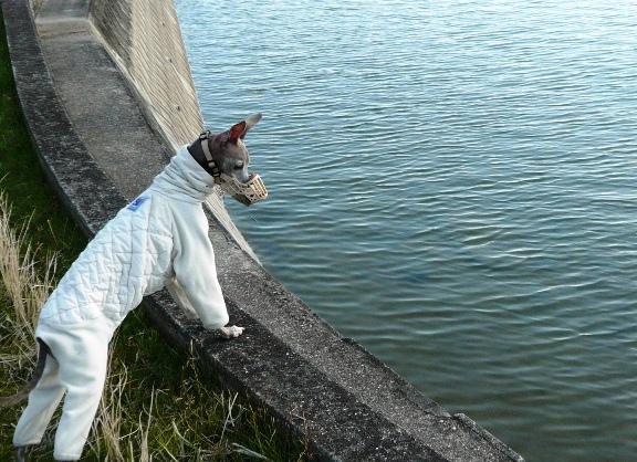 誰かが放したのか、この池には錦鯉が何匹が居ます