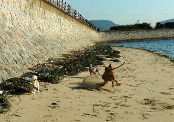 さすが大型犬。巻きあがる砂も大量っ!笑