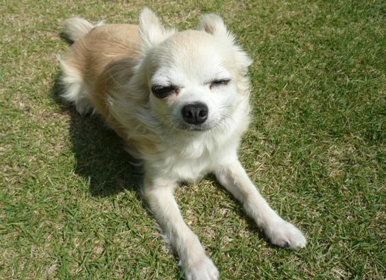 犬に叱られる三十路のワタシ