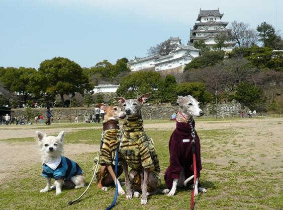 必死で犬を座らせて、集合写真を取る変な飼い主達