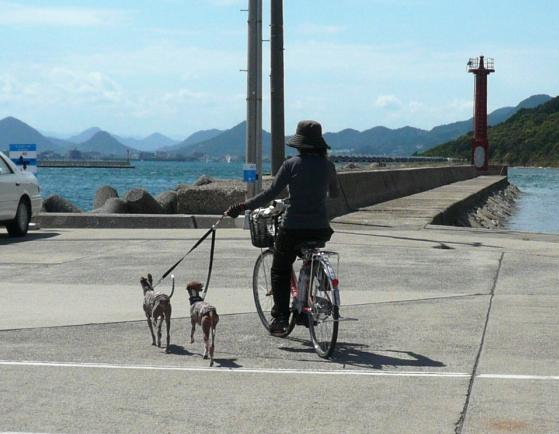 電動自転車は3時間500円。