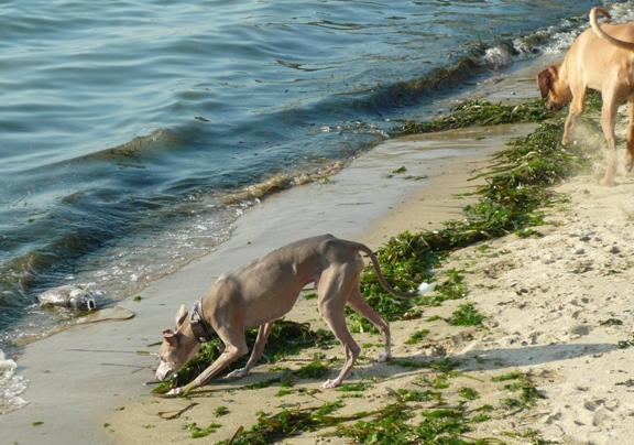 魚は諦めて海藻サラダか?