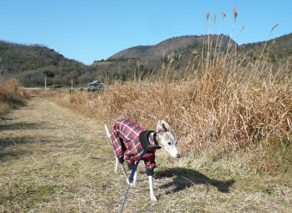 長い散歩だったのに、誰にも会いませんでした。さすが田舎道・笑