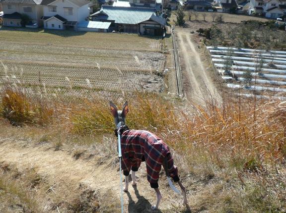 山が近いので、土地が斜面になっているTDC家周辺
