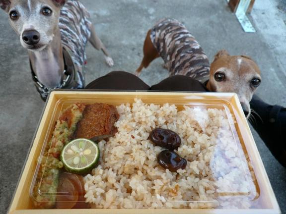 ご飯の上に乗ってるのは、香川の特産しょうゆ豆です。