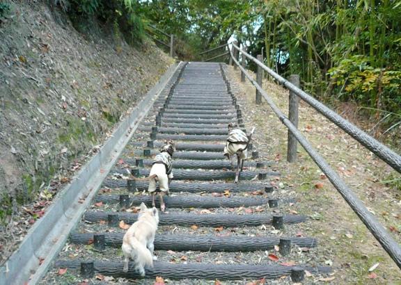 走らないで~、階段しんどいから~~。