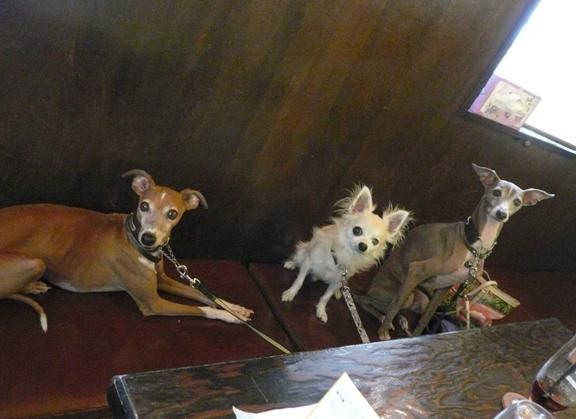 トトが小さい頃からの習慣で、ここのドッグカフェだけは、椅子OKの暗黙の了解が。。。