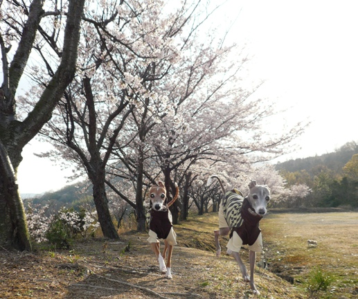 今年の春の風景
