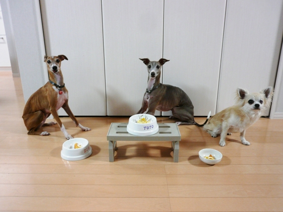 去年はT&Dが並んでケーキ食べたけど、今年はチワが増えて3頭並んでケーキを食す。