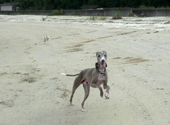 砂は水で締まっていて、走りやすそうだった