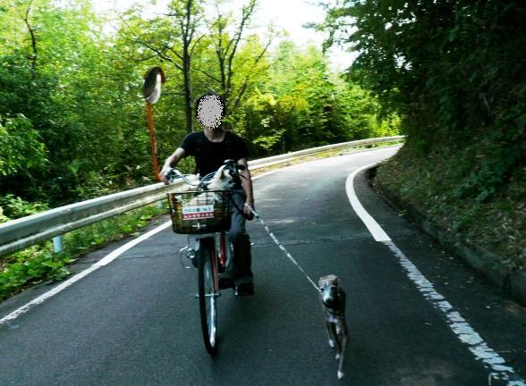 ディオも意外と自転車引き散歩 大丈夫でした