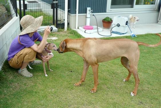 卓造、初めての大型犬です