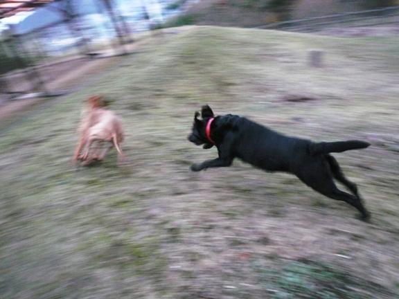 もっと遊ばせたいんだけど、いつも飼い主さんが後から来て繋いで行っちゃうの。残念。