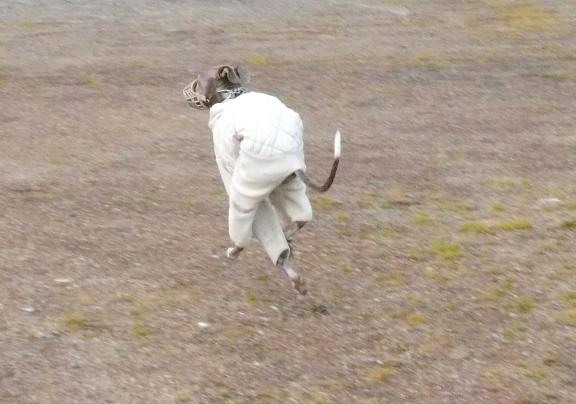ウサギのように?走るトト