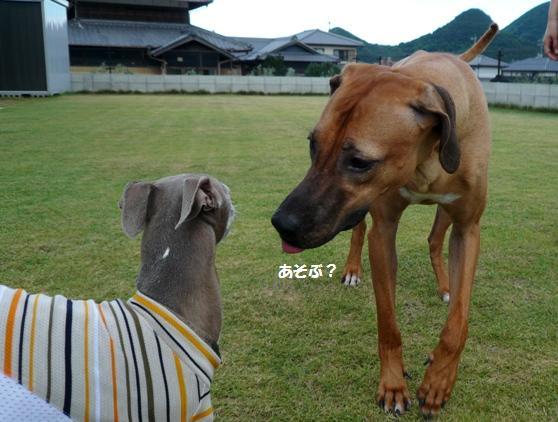 シャ「あ、見たことある犬だ」