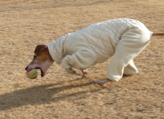 ボールを取る瞬間・・・じゃなくて、持っていたボールが口から滑った瞬間。