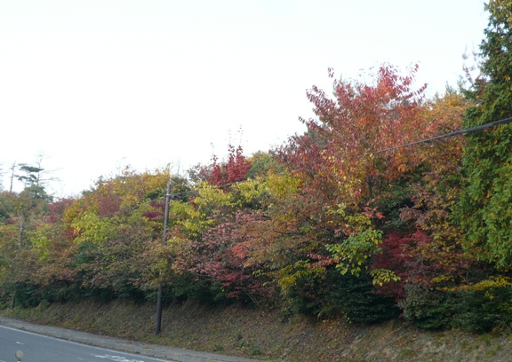 秋色の山♪