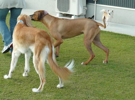 見てるとやっぱり、大型犬っていいなぁ、と思います。