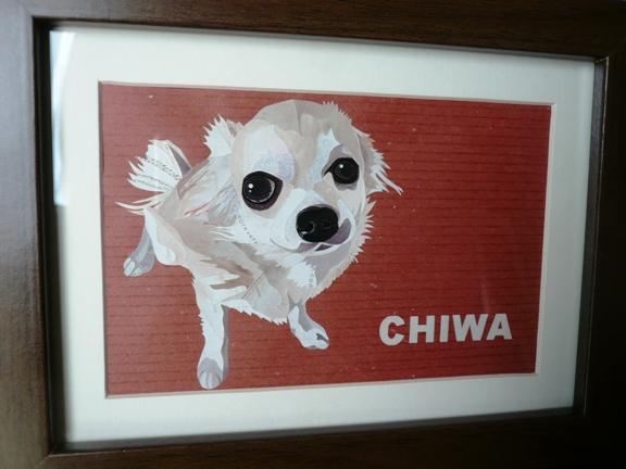 chiwaコラ