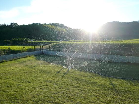 日が沈みかけたら、芝生に水やりタイム