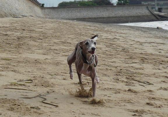 砂浜好きなトト