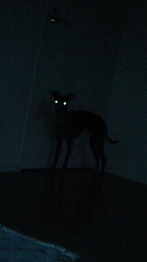 「ボクやでー。暗いけど見えてる?」