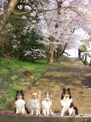 いつもの散歩の階段IW