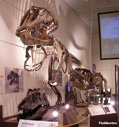 マプサウルスの復元骨格〈大恐竜展-大阪市立自然史博物館-〉