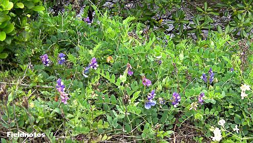狭い土手の上に咲いていた紫色の花