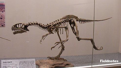 ウネンラギアの復元骨格標本〈大恐竜展-大阪市立自然史博物館〉