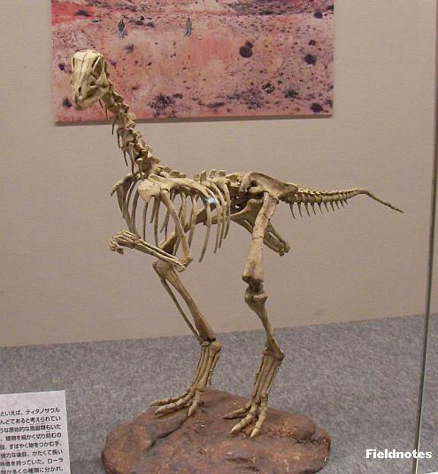 アナビセティアの復元骨格標本〈大恐竜展-大阪市立自然史博物館〉