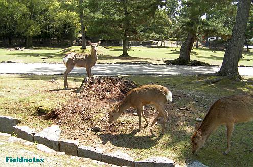 シカが自由な奈良公園