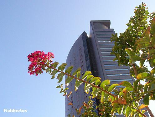 パークスガーデンの百日紅と隣接するパークスタワー