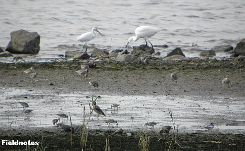 種類も数も豊富な海老江干潟の鳥たち