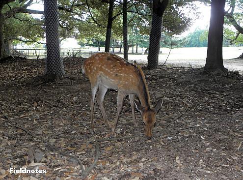 奈良公園の飛火野の林の中の鹿