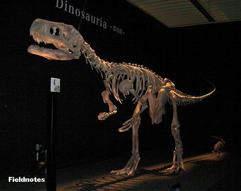 最古の恐竜の一つフレングエリサウルス[地球最古の恐竜展(大阪南港ATCミュージアム)]