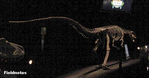 まるで恐竜のようなワニのシロスクスの全体[地球最古の恐竜展(大阪南港ATCミュージアム)]