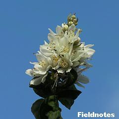 ちはや園地で咲いていた白い花