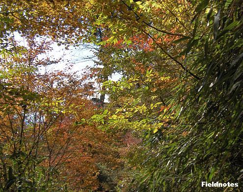 弁天岳と大門の間の黄葉スポット