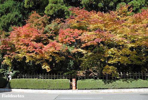 壇上伽藍南縁のポストと紅葉と高野槙
