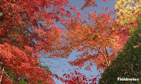 壇上伽藍の蛇腹道の紅葉