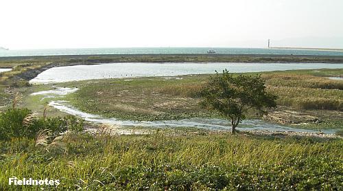 野鳥園の西池と干潟