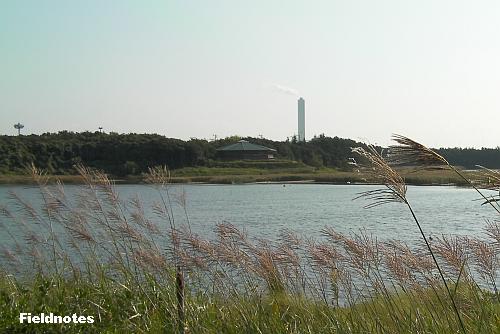 野鳥園の北池と展望塔(中央)