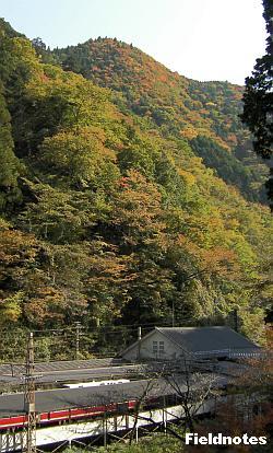 極楽橋駅と紅葉する山