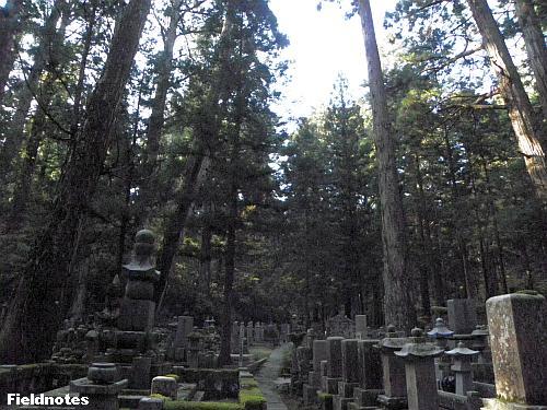 晴天の昼でも暗い奥の院参道の杉の杜