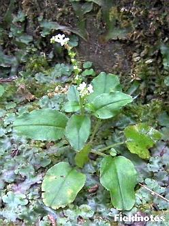 白くて小さい花が咲いている様子