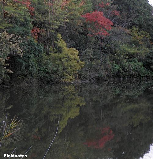 池に映った逆さ紅葉[錦織公園]