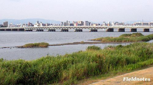 海老江干潟あたりの淀川
