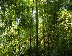 四角い竹・・・。